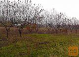 Ankaran okolica 1660 m2