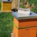 čebele