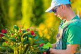 Nudimo izkušene pridne delavce za sezonsko delo v vrtnarijah