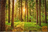 Kvaliteten Gozd Z Dostopom